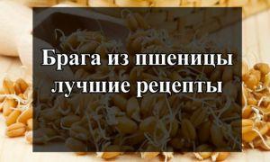 Как приготовить брагу из пшеницы в домашних условиях: рецепты и технология