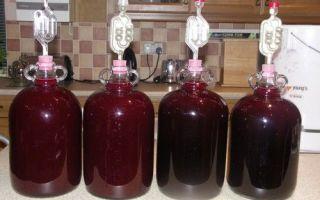 Рецепты вина из черноплодной рябины в домашних условиях