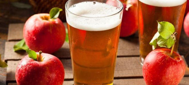 Рецепты приготовления яблочного сидра в домашних условиях