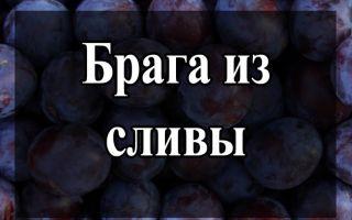 Брага из сливы: рецепты и правила приготовления