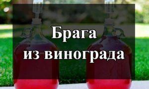 Как сварить отличную брагу из винограда в домашних условиях