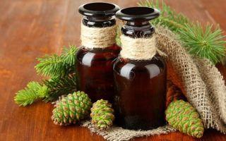 Делаем настойку из сосновых шишек — на спирту, водке и самогоне