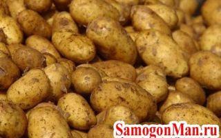 Самогон из картофеля — рецепт изготовления в домашних условиях