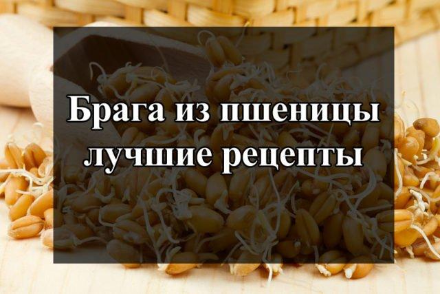 Рецепт браги из пшеницы