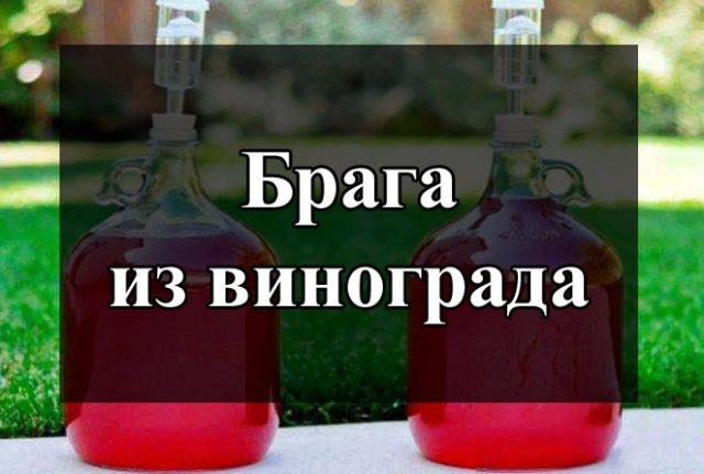 Как сделать брагу из виноградного