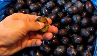 подготовка сливовых плодов