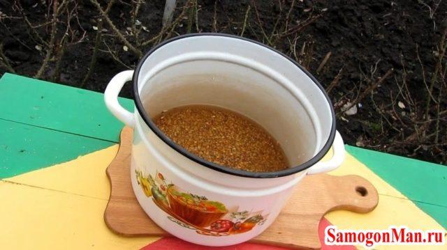 Как сделать брага из пшеницы
