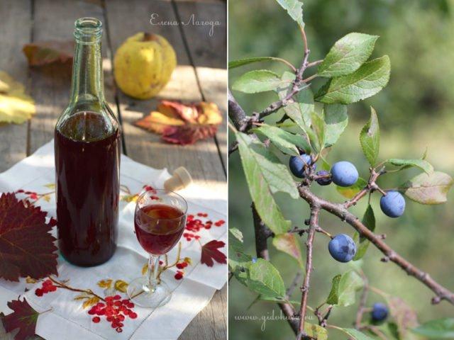 Вино из тёрна в домашних условиях простой рецепт