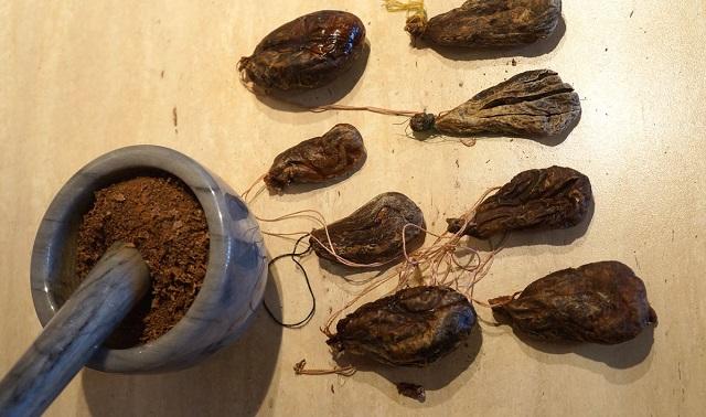бобровая струя в народной медецине