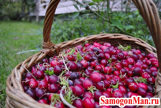 подготовка ягоды