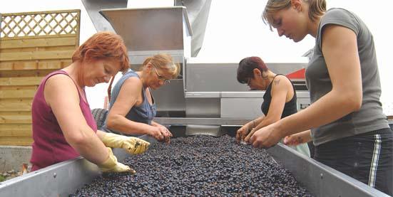 выбор качественных виноградин