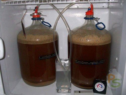 брожение домашнего пива