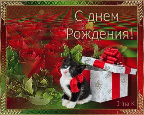 Подарок с котенком