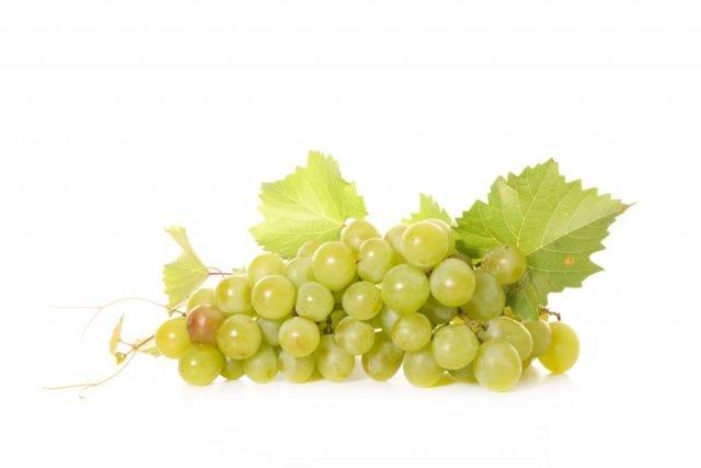 виноград сорта «Белый мускат»