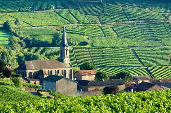 Бургундские виноградники