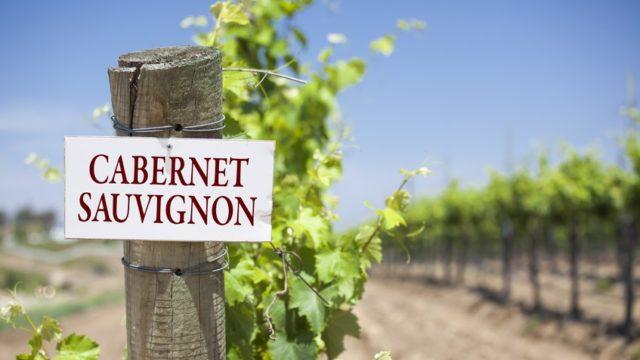 виноградники каберне совиньон