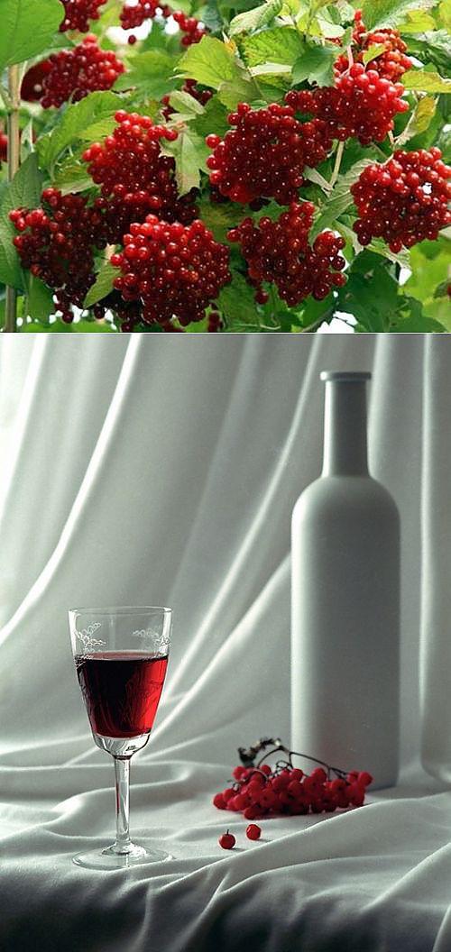 столовое вино из калины