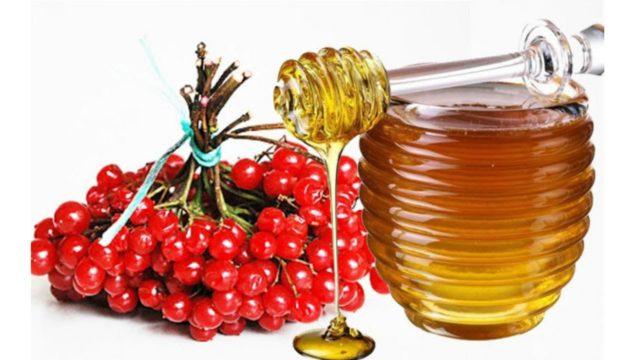 настойка из калины на меду