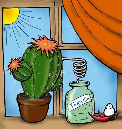 текила - самогон из кактусов