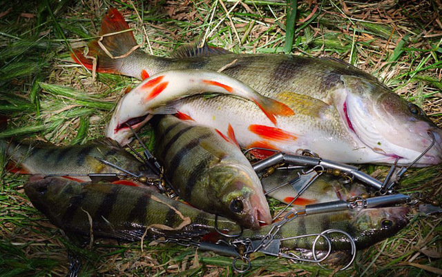 Рыба холодного копчения, как ее приготовить в домашних условиях