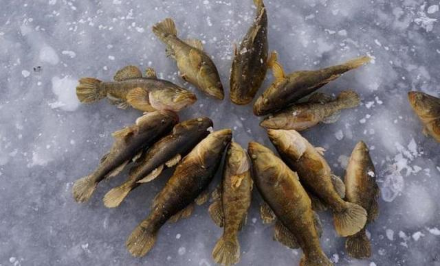 Как правильно закоптить ротана, опыт заядлых рыбаков