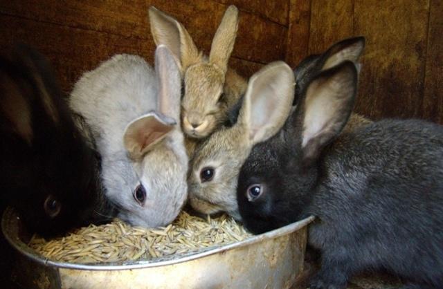 Как закоптить кролика в домашних условиях, простые рецепты