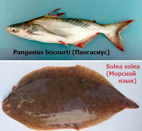 Копченый пангасиус: способы приготовления, польза и вред