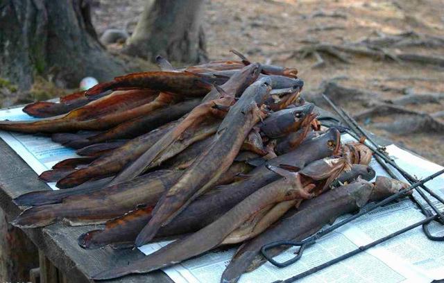 Как коптить налима, советы от опытных рыбаков